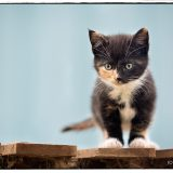 Kitten on Pallets