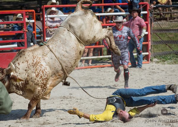 The father of a bullrider tries to show his son how it is done.