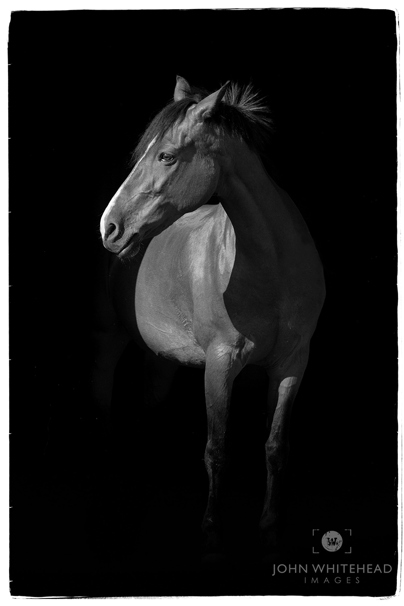Equine Blackout Portrait